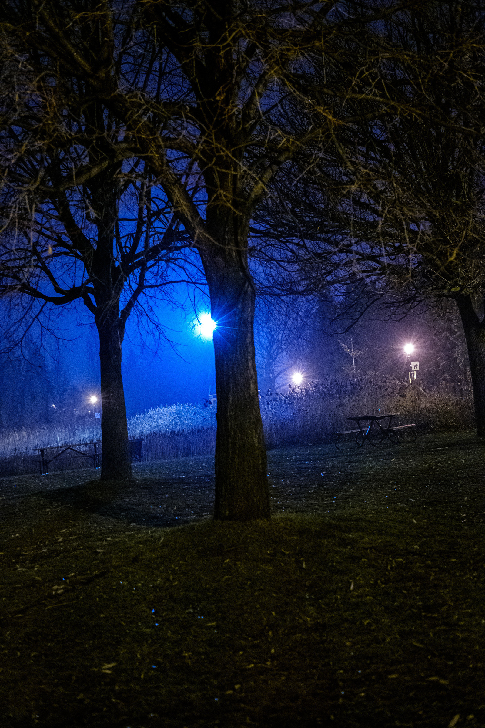 Spooky trees after dark