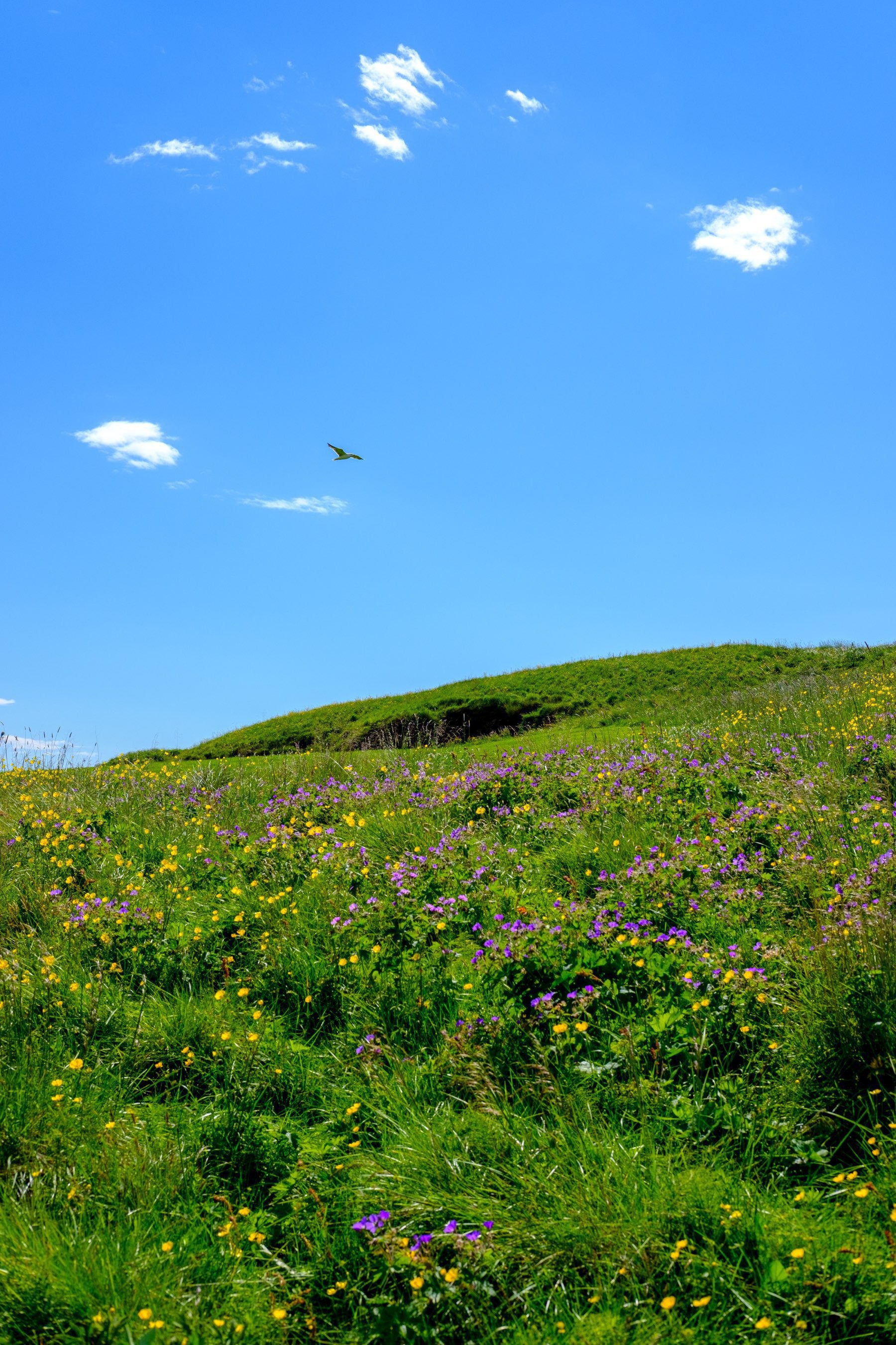 A gull flies against a very summery landscape