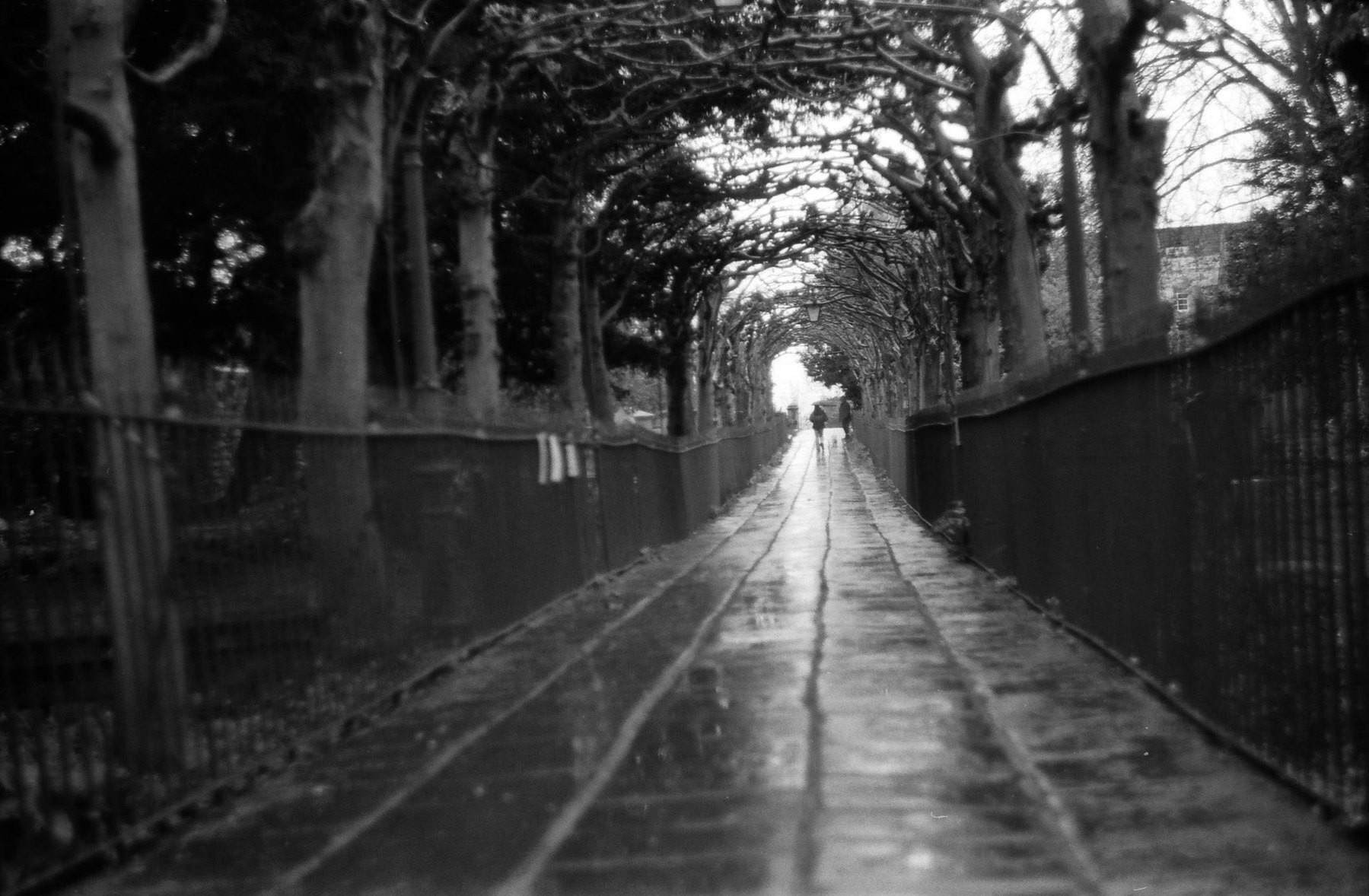 A pavement runs through a tunnel of thorny trees.